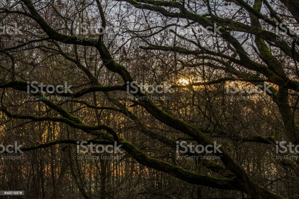 Sonnenuntergang im Wald stock photo