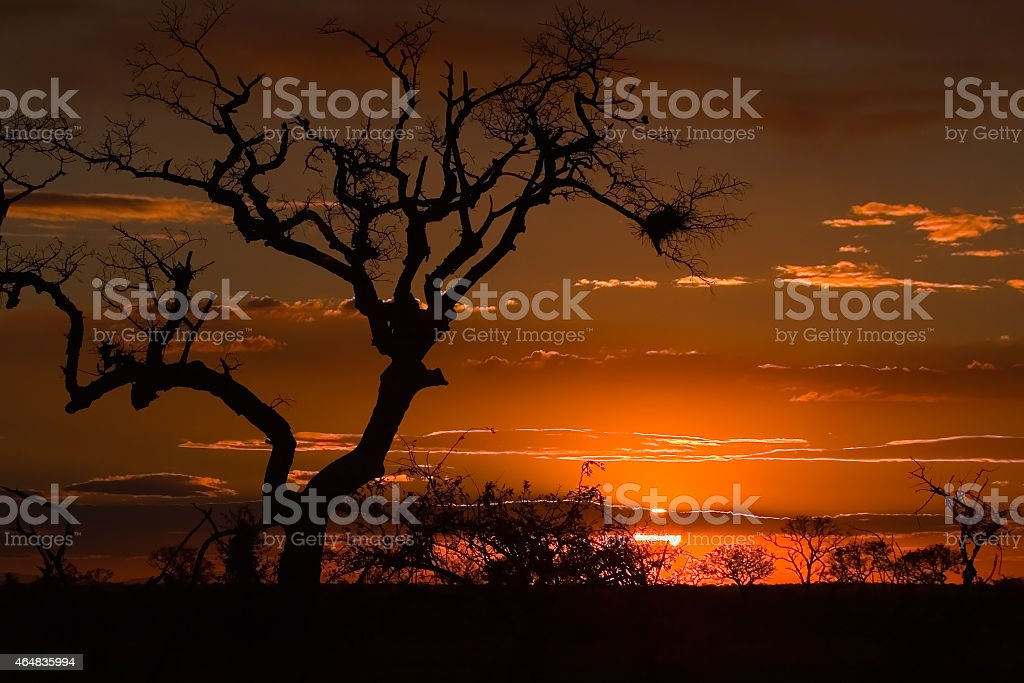 Sunset in the Kruger National Park, South Africa. stock photo