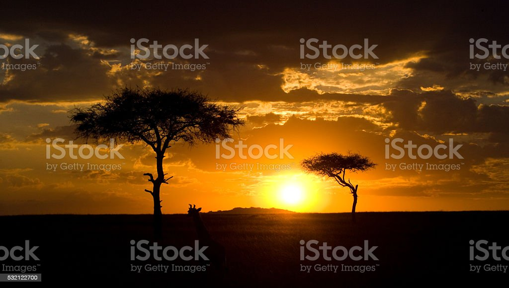 Sunset in the Maasai Mara National Park. Africa. Kenya stock photo
