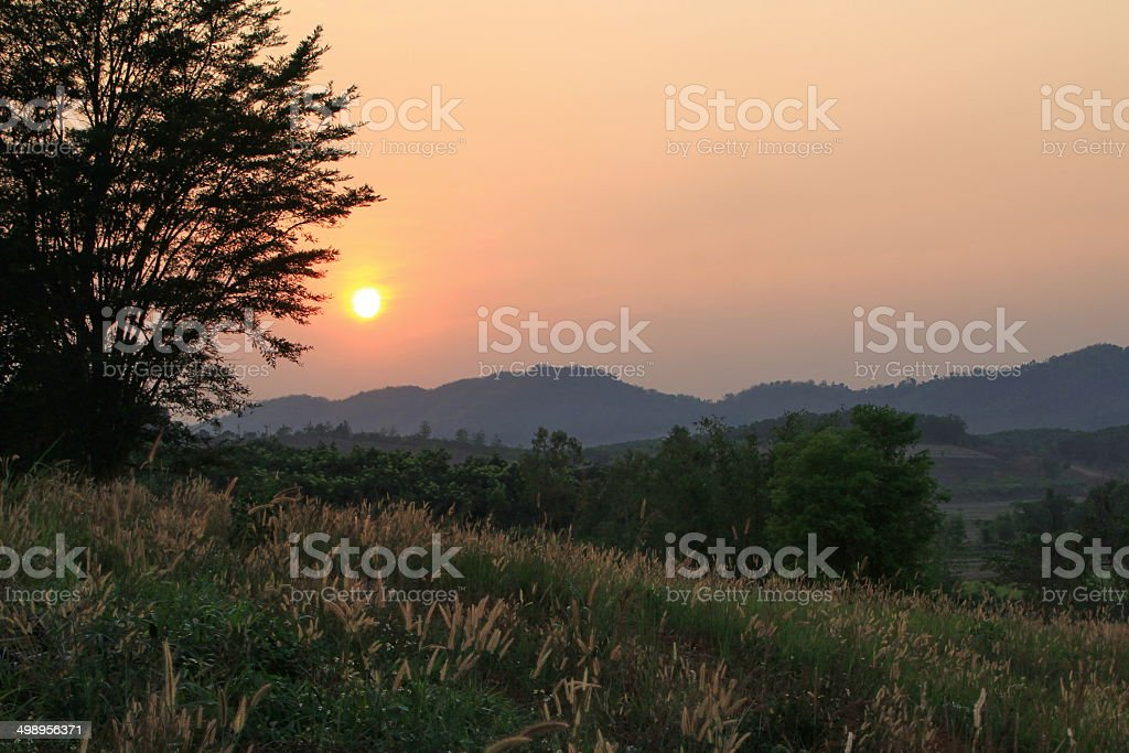 Sunset in the meadow stock photo