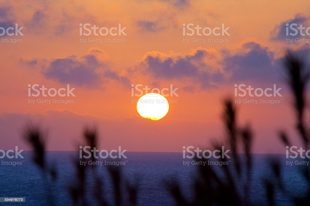 Sunset in the mediterranean sea with pine tree leafs stock photo