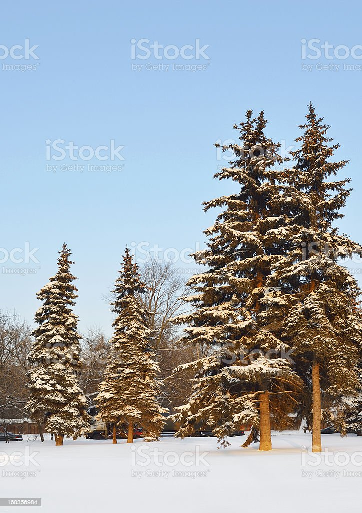 Sunset in the Moscow winter park royalty-free stock photo