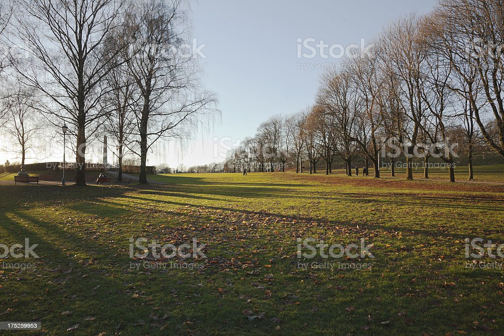 Sunset in the park. royalty-free stock photo