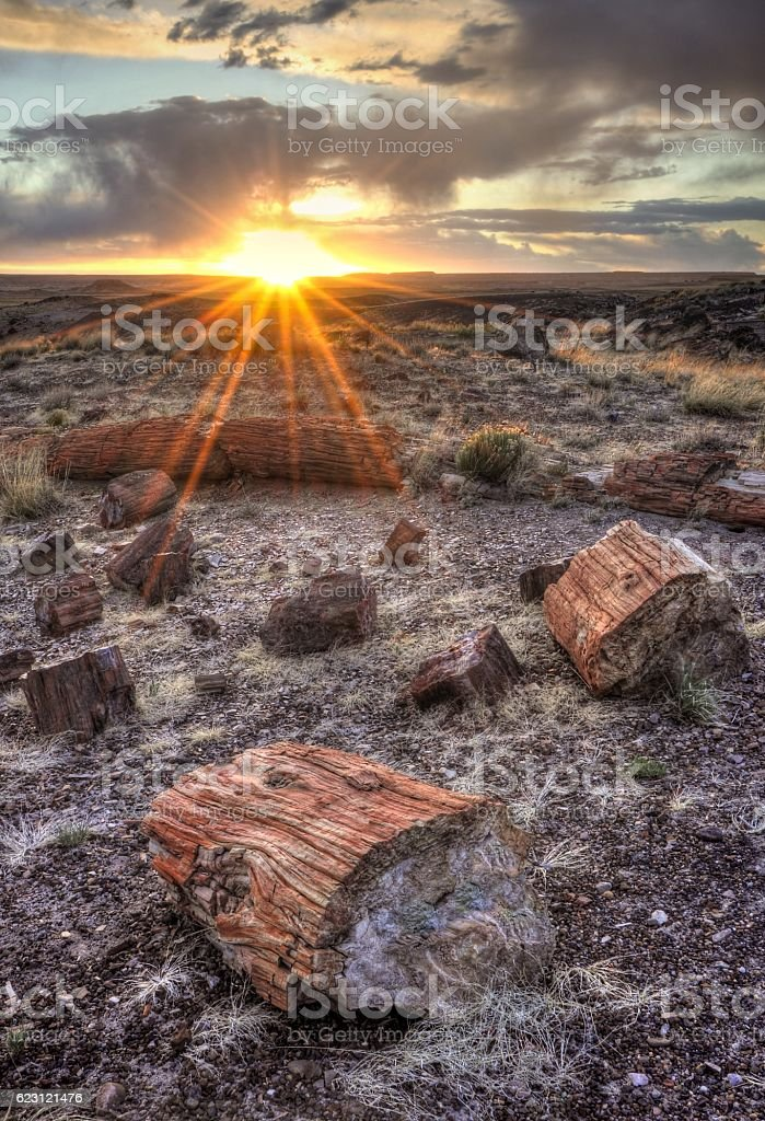 Sunset in the Petrified Forest stock photo