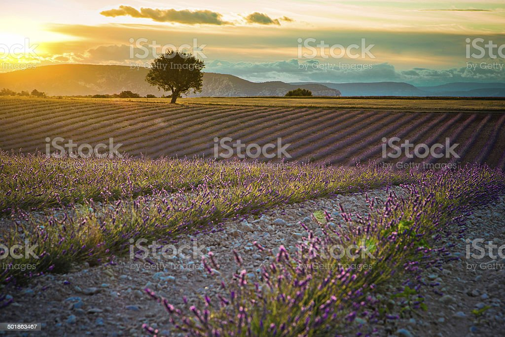 Sunset in the Provence stock photo