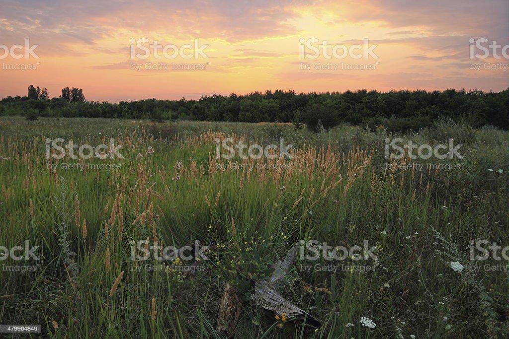 Coucher de soleil dans la steppe. photo libre de droits