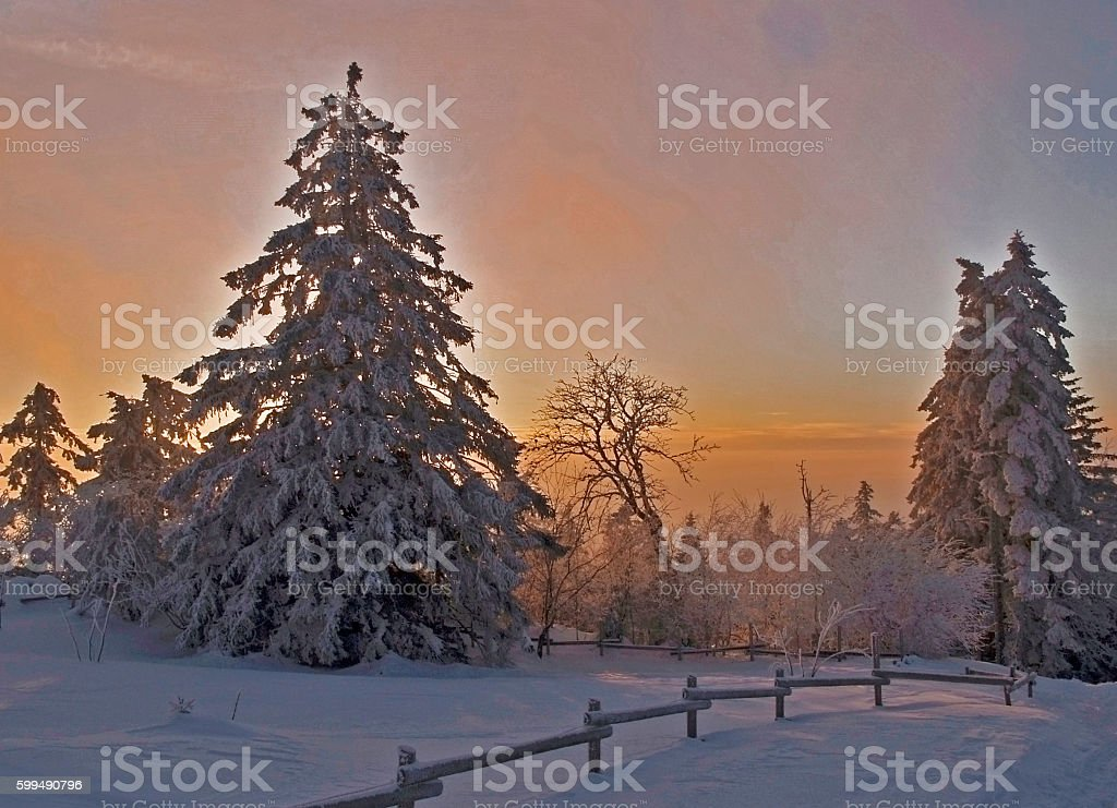Sunset in the winter forest with snow covered firs stock photo