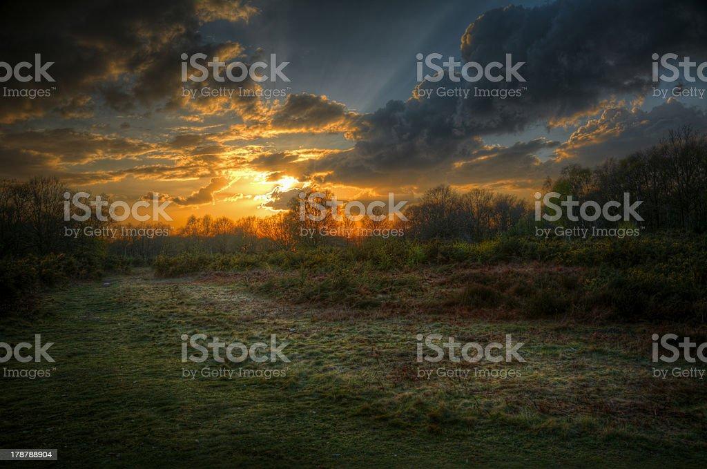 Coucher de soleil dans la forêt photo libre de droits