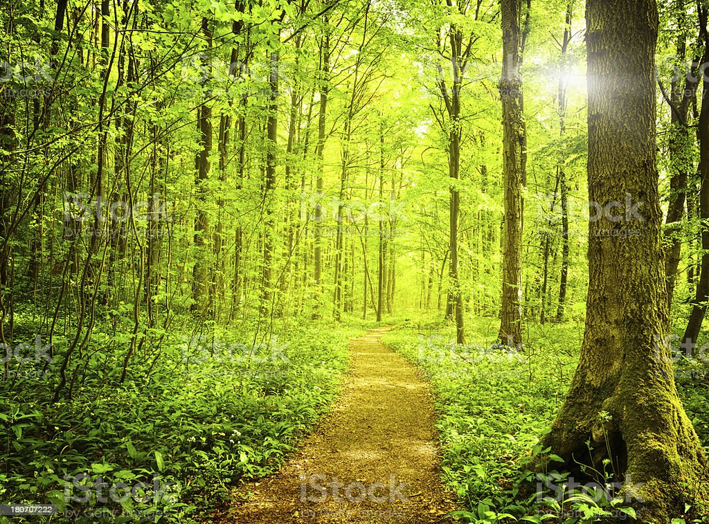 sunset in the woods royalty-free stock photo