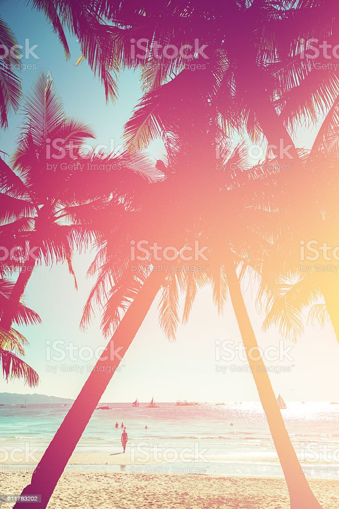 Sunset in tropics. Coconut trees and turquoise sea stock photo