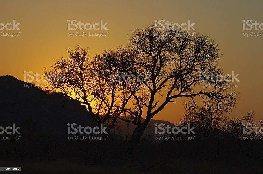 Sunset in Wild Africa stock photo