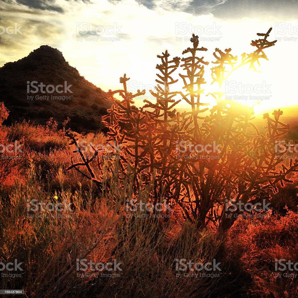 sunset landscape desert stock photo