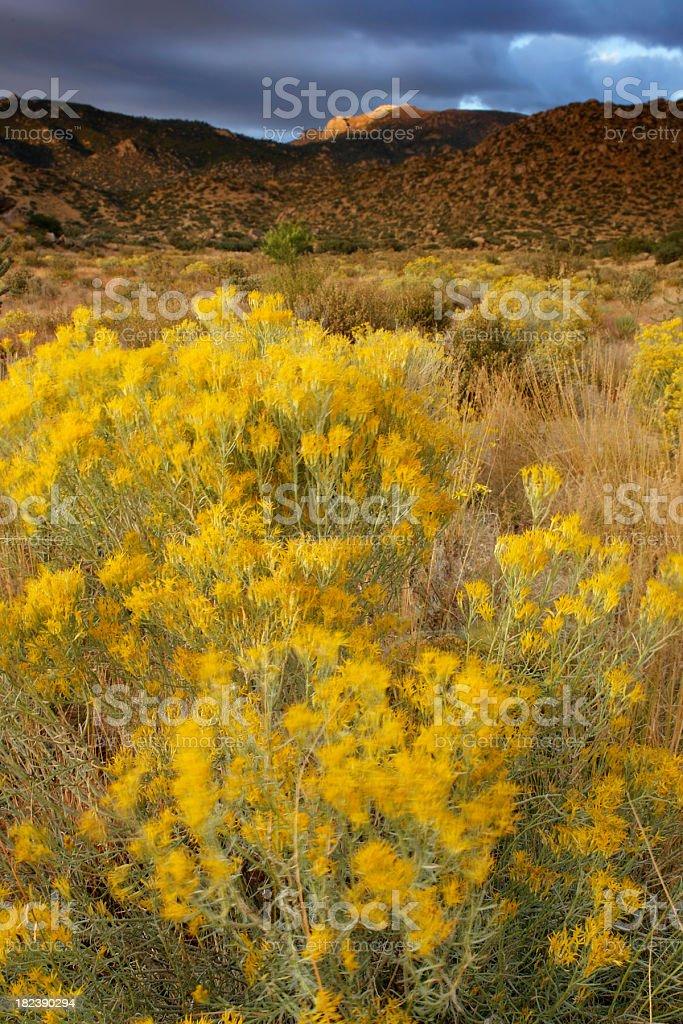 sunset landscape desert sagebrush mountain royalty-free stock photo
