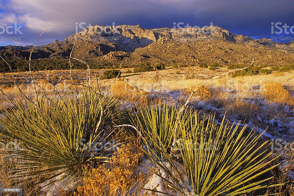 sunset landscape mountain desert yucca royalty-free stock photo