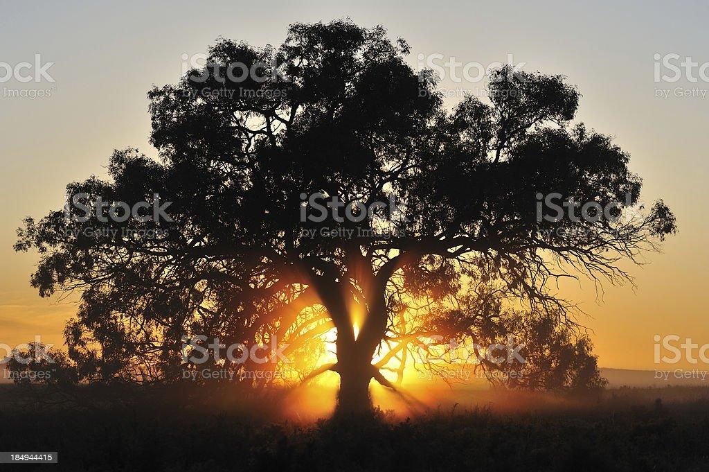 Sunset landscape, Outback Australia, royalty-free stock photo