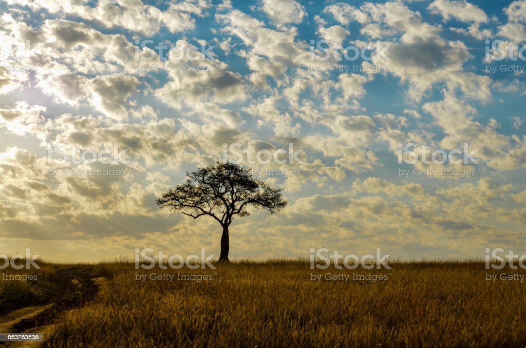 Sunset landscape with a lone tree stock photo