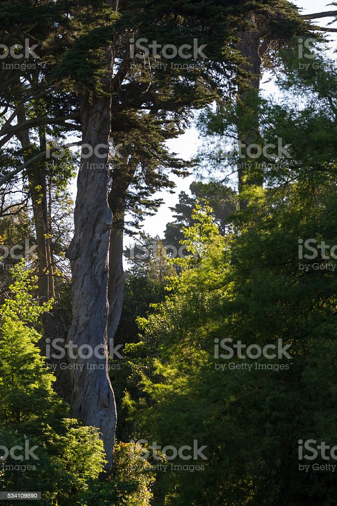 Sunset light in San Francisco Botanical Garden stock photo