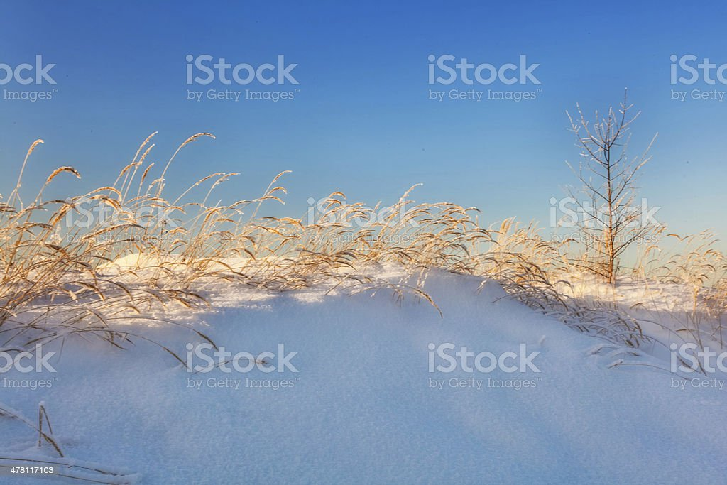 Sunset light in winter field royalty-free stock photo
