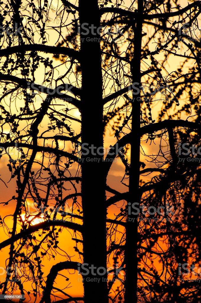 Sunset Mountain Beauty stock photo