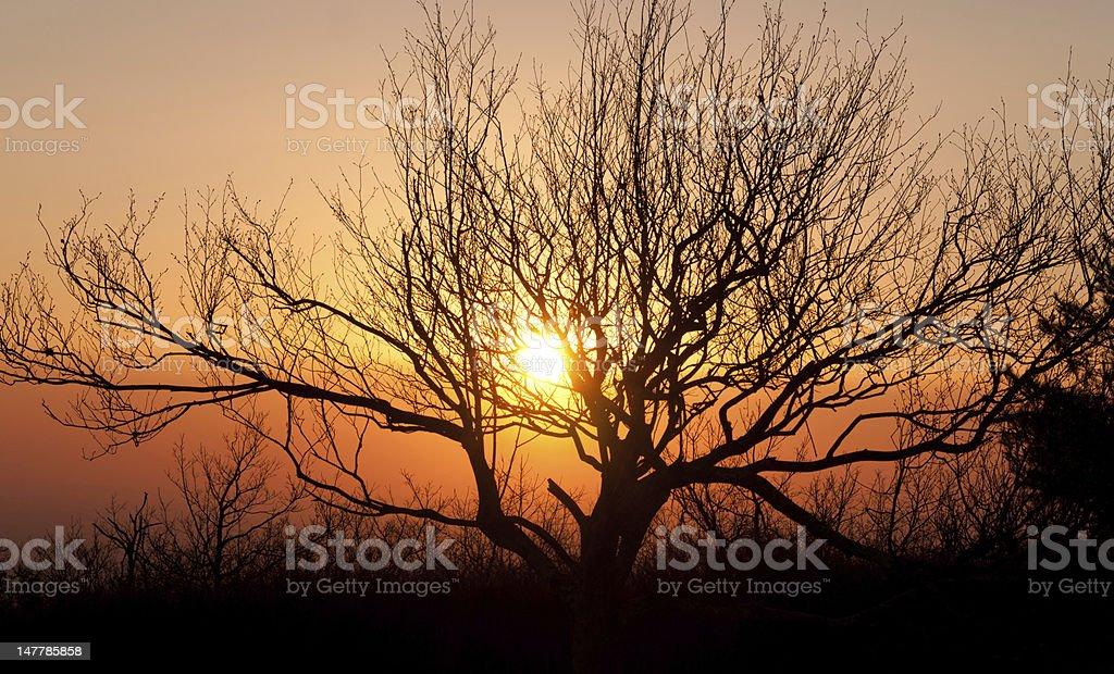 Sunset on a mountain ridge royalty-free stock photo