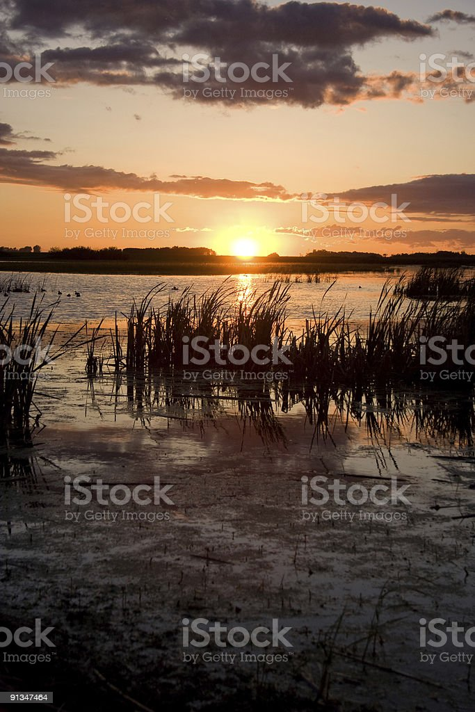 Sunset on a Prairie Swamp royalty-free stock photo