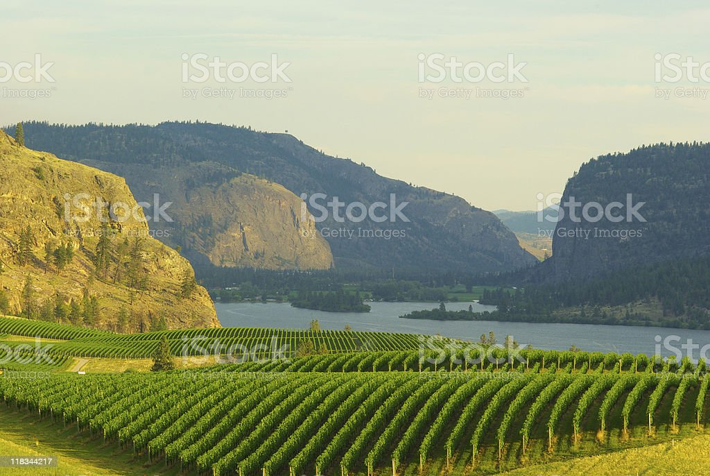 Sunset on Blue Mountain Vineyard stock photo