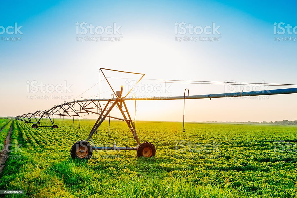 Sunset on farm with irrigation system and  soybean plants stock photo