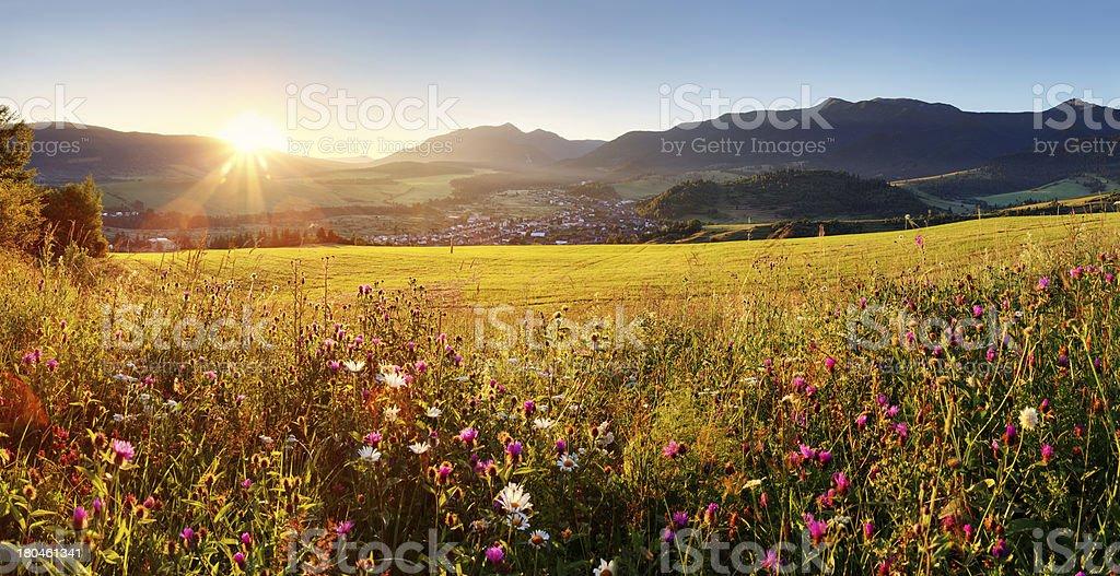 Sunset on flower field - Slovakia Tatra stock photo