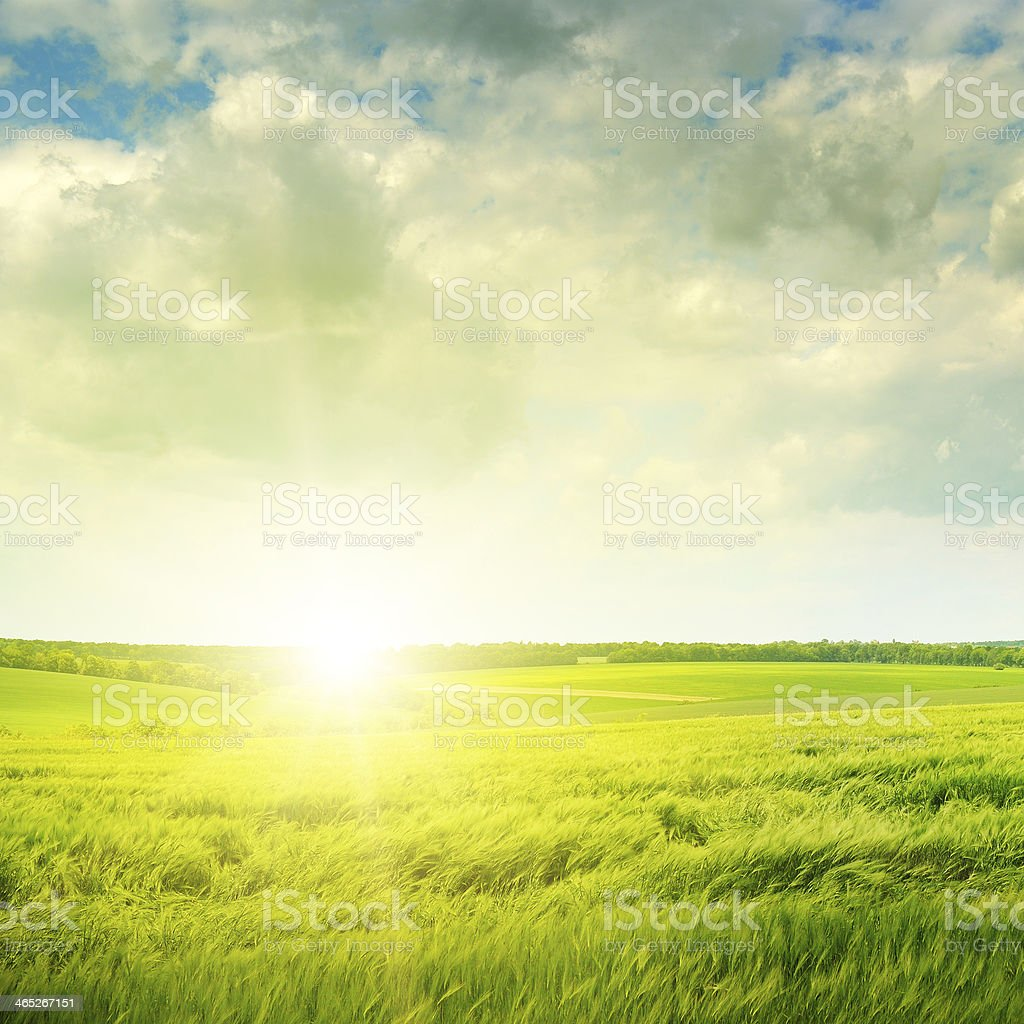 sunset on green field stock photo