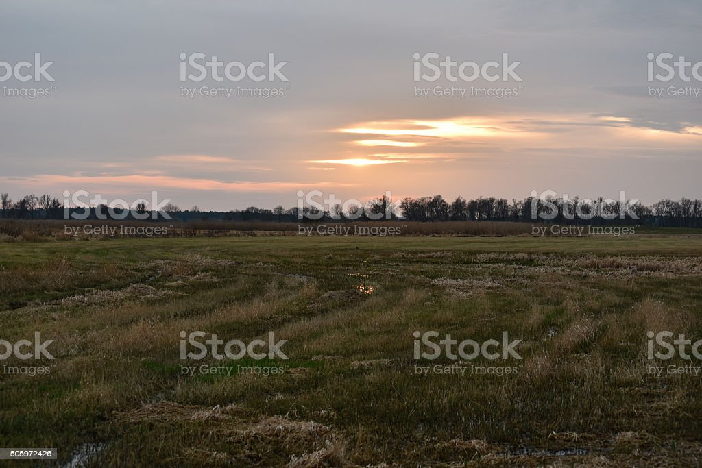 Sunset on Havel river meadow. landscape with typical willow trie stock photo