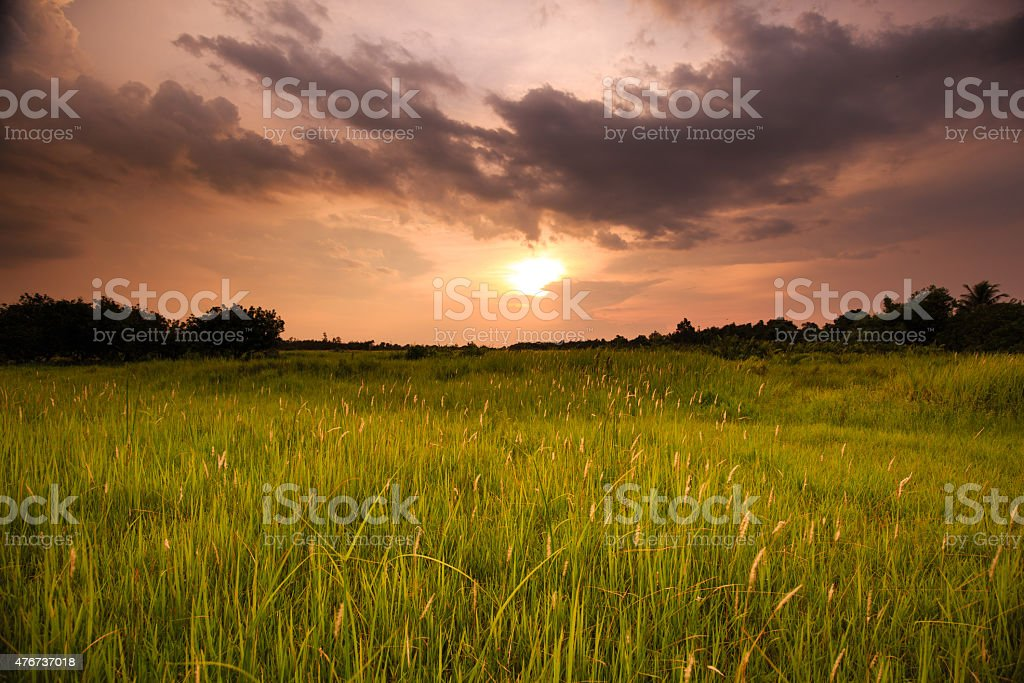 sunset on meadow wild stock photo