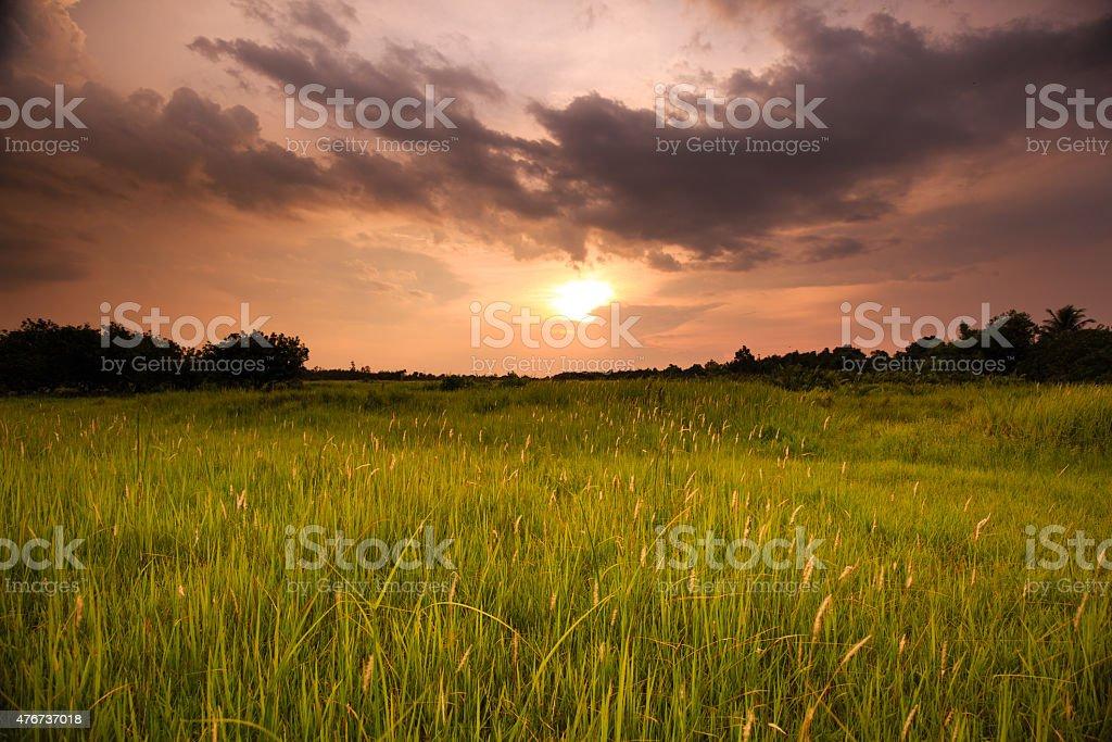 sunset on meadow wild stock photo