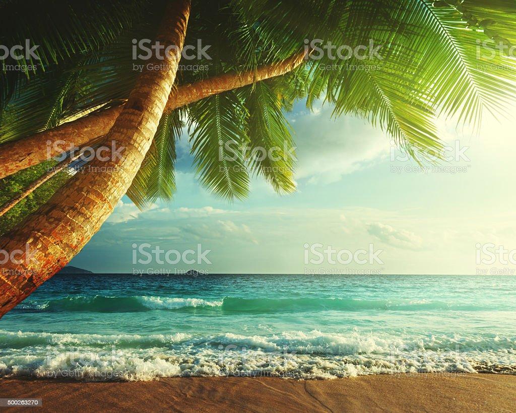 sunset on Seychelles beach stock photo
