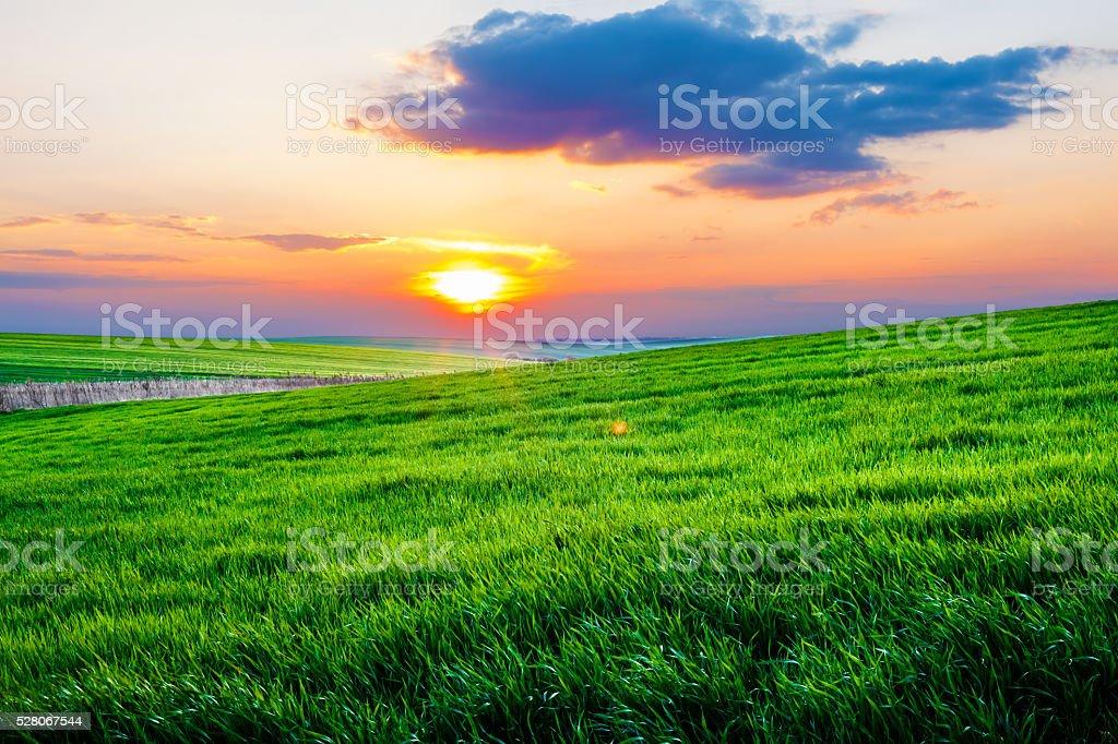 Sunset on spring field stock photo
