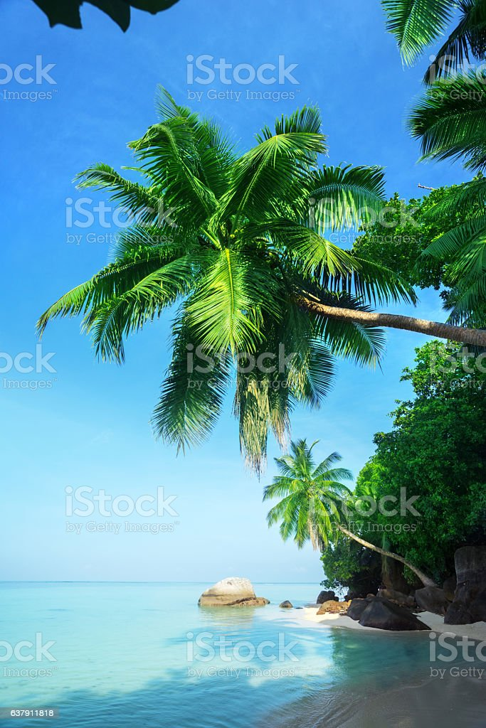 sunset on the beach, Mahe island, Seychelles stock photo