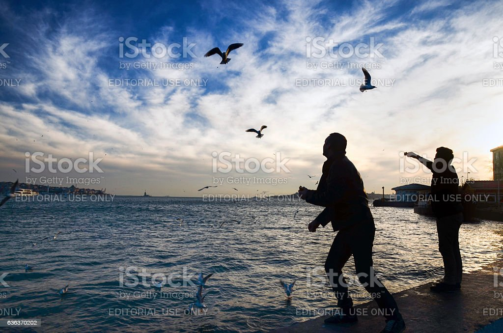 Sunset on the beach seagulls food-giving a man stock photo