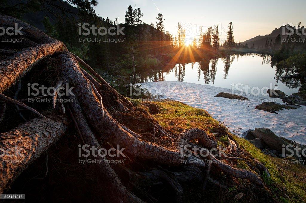 Sunset on the lake. Wildlife Siberia. Light illuminates the root stock photo