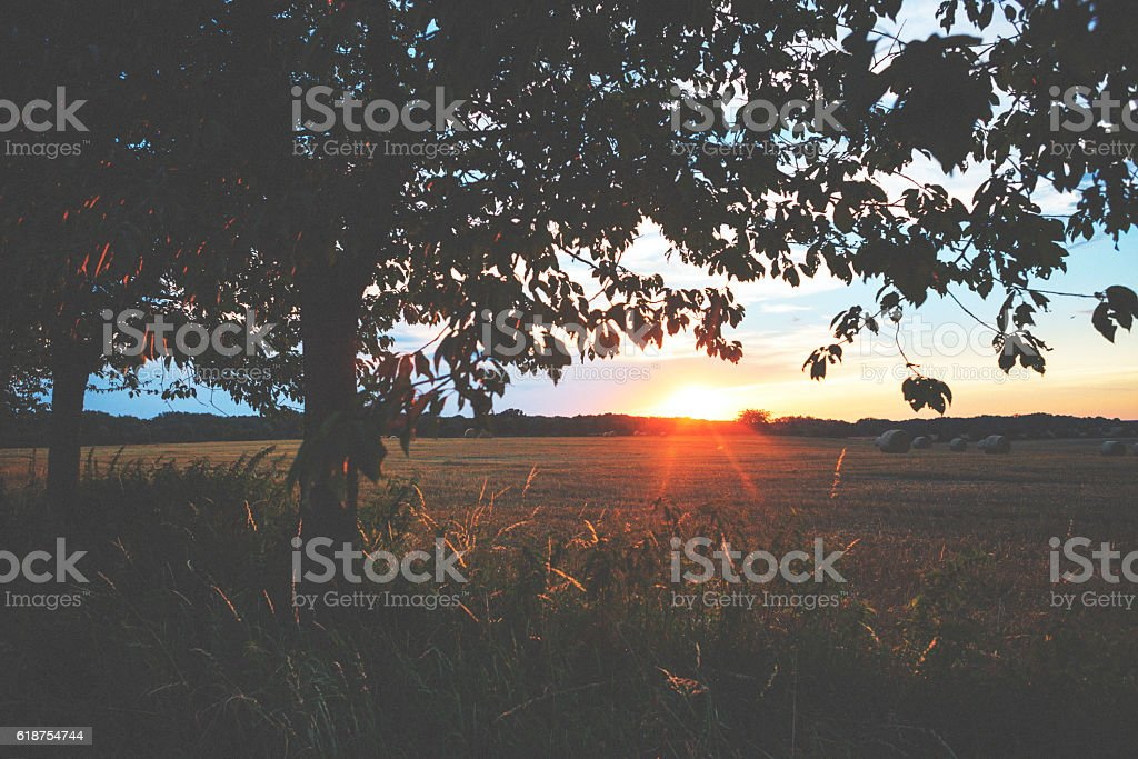 Sunset on the meadow with trees stock photo
