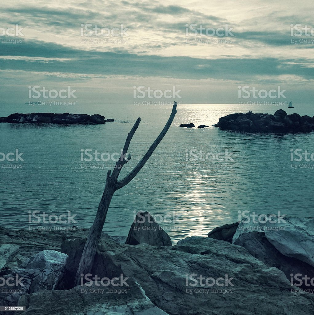 Sunset on the sea with rocks and a dead branch stock photo