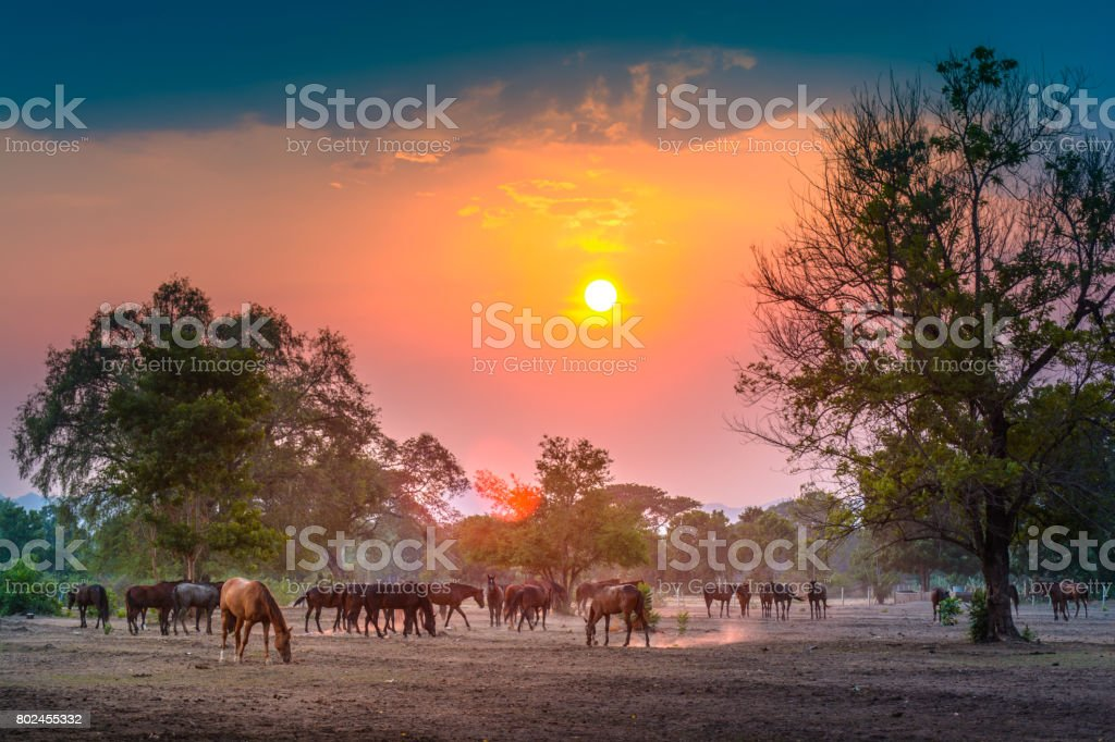 Sunset on the stable stock photo