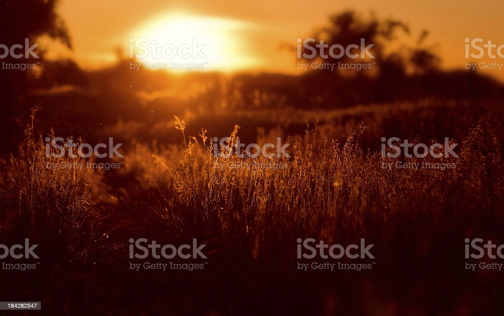 Sunset on the summer meadow stock photo