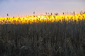 Sunset on the winter meadow
