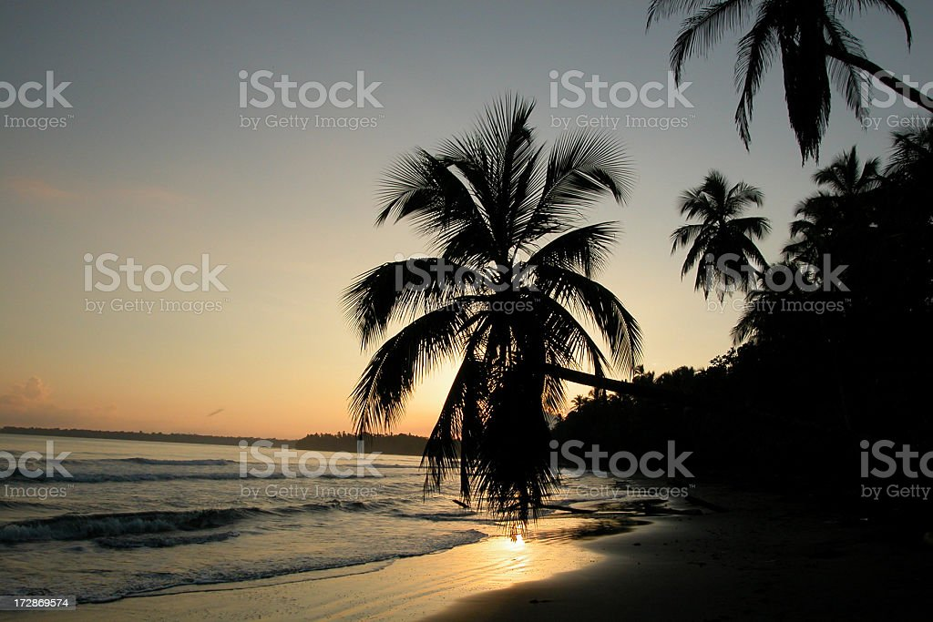 Sunset on Tropical Beach and Palm Trees, Costa Rica stock photo