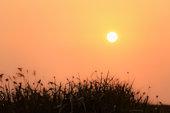 sunset or sunrise silhouette