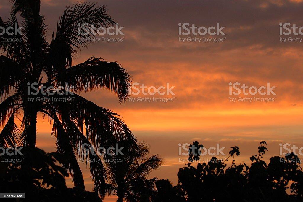 Sunset orange sky with backlit palm trees stock photo