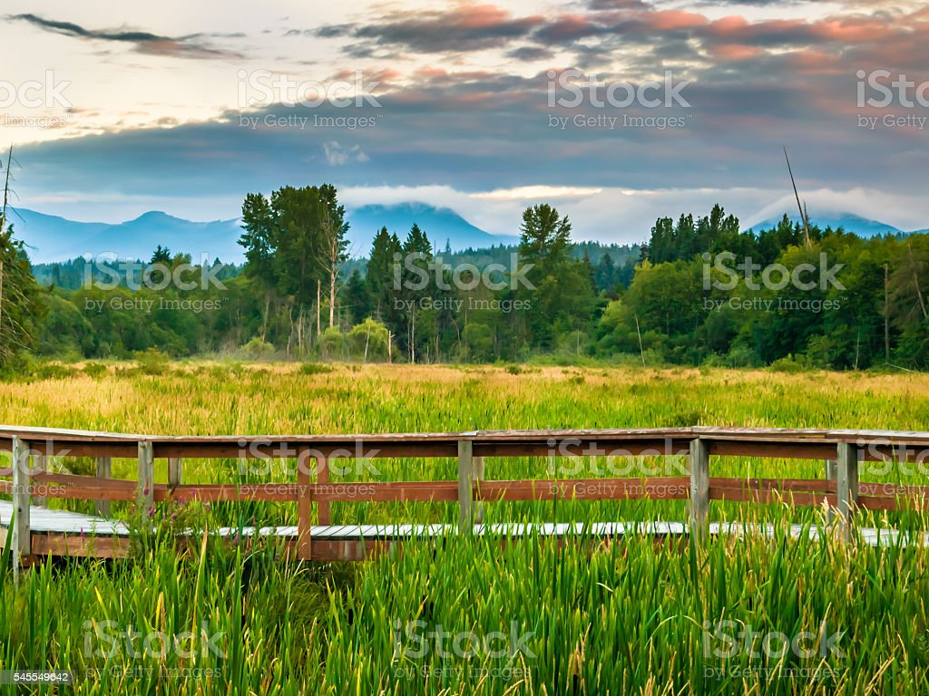 Sunset over a Marsh and pathway stock photo