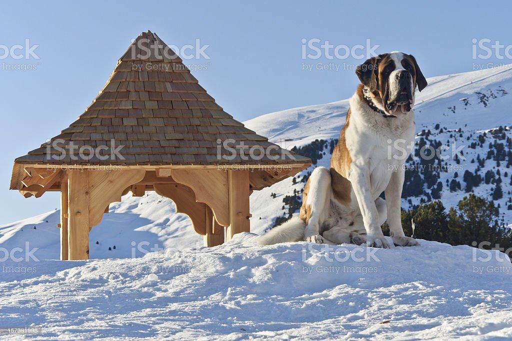 Sunset over a San Bernardo dog and Dolomites stock photo
