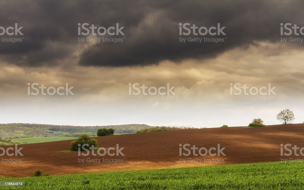 sunset over agricultural green field stock photo