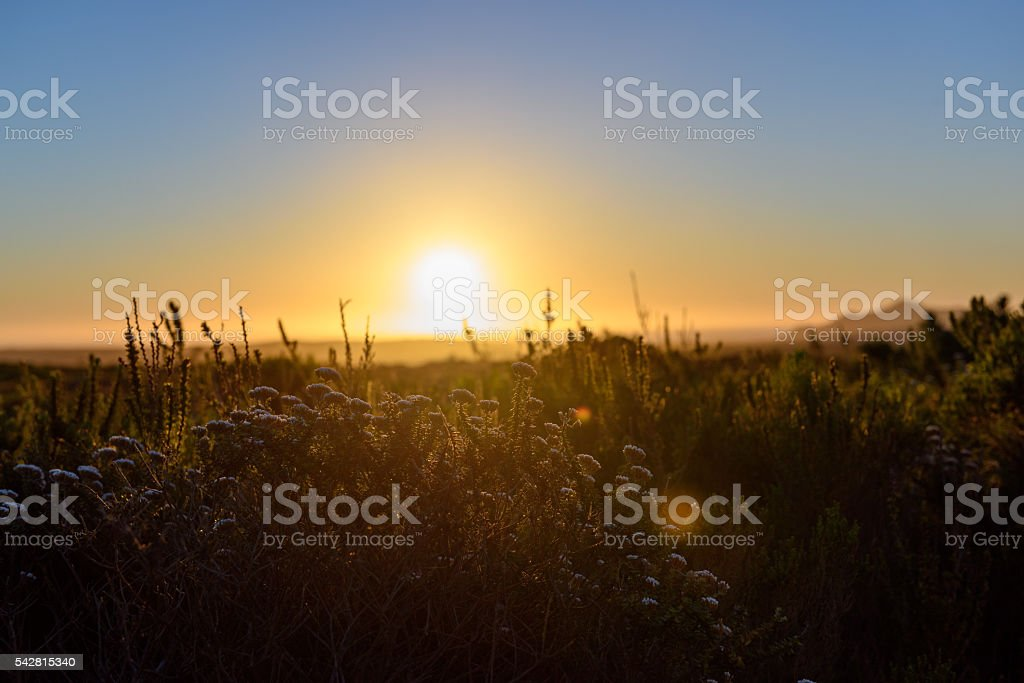 Sunset over Cape peninsula stock photo