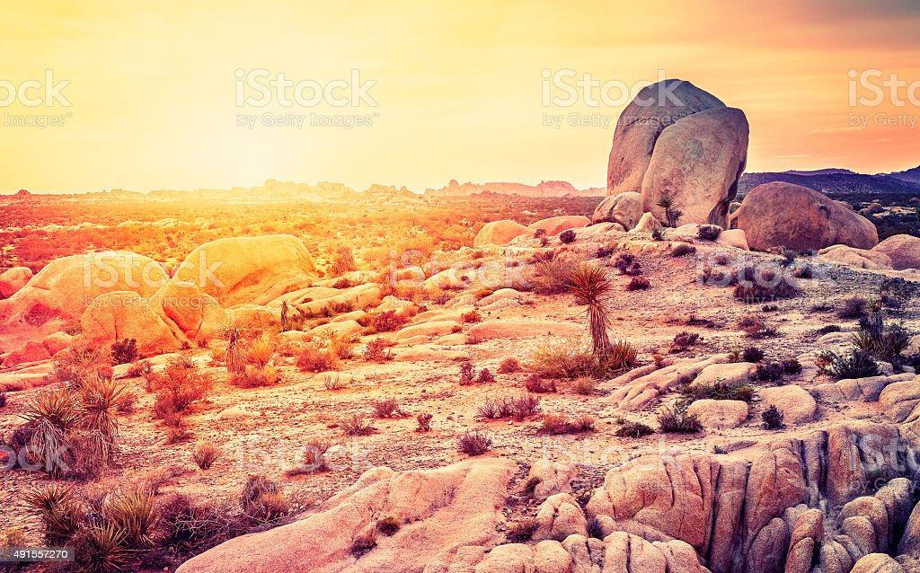 Sunset over desert in Joshua Tree National Park, California, USA stock photo